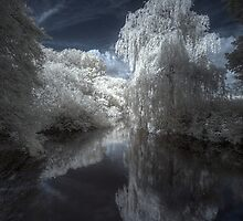 Willow Reflections  by Martin Finlayson