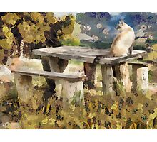 Baza and the cat Photographic Print