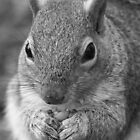 Squirrel 5 - Black and White Portrait by Peter Barrett