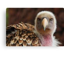 Griffin Vulture (Gyps fulvus)  Canvas Print