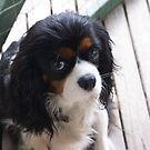 our dear little Darcy by BronReid