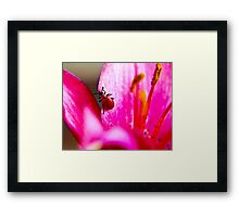 Lily Beetle Framed Print
