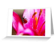 Lily Beetle Greeting Card
