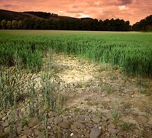 The Field by dmuir