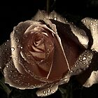 bronze rose by julie anne  grattan