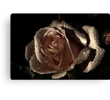bronze rose Canvas Print