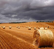 Harvest before the storm by John Wallace