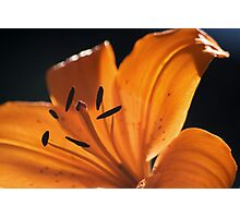 Stamen Silhouettes Photographic Print