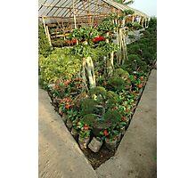 flower plantation Photographic Print