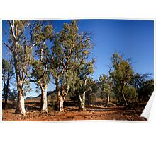 Gum trees in Outback Australia Poster