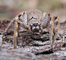 Arachnophobia!!!! by Rick Playle