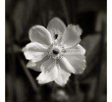 La mouche Photographic Print