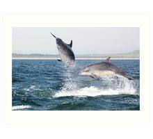Moray Firth Bottlenose Dolphins Art Print