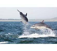 Moray Firth Bottlenose Dolphins Photographic Print