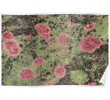 Earth's hidden Treasures Plate # 7 Poster