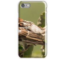 House sparrow iPhone Case/Skin