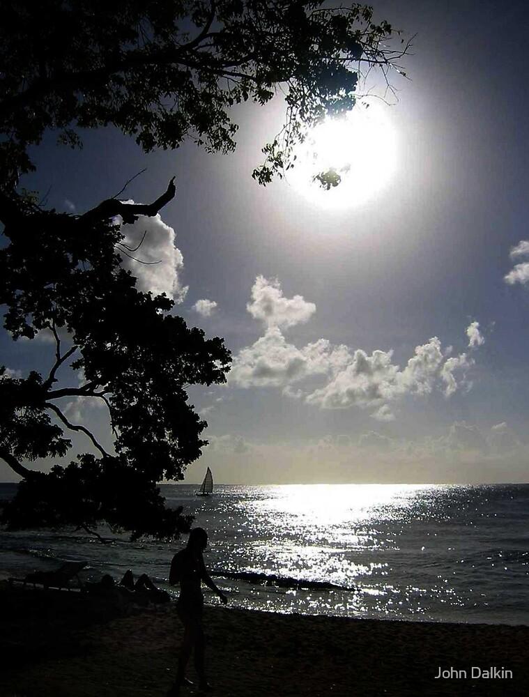 Moonlight by John Dalkin