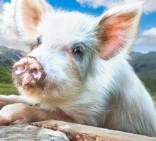 Cute White Pig Looking Over Wall Sticker