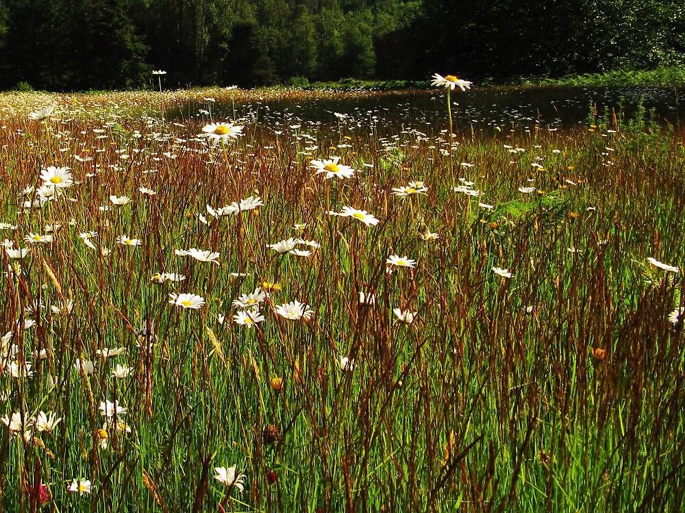 Field of Flowers by Mike  Kinney