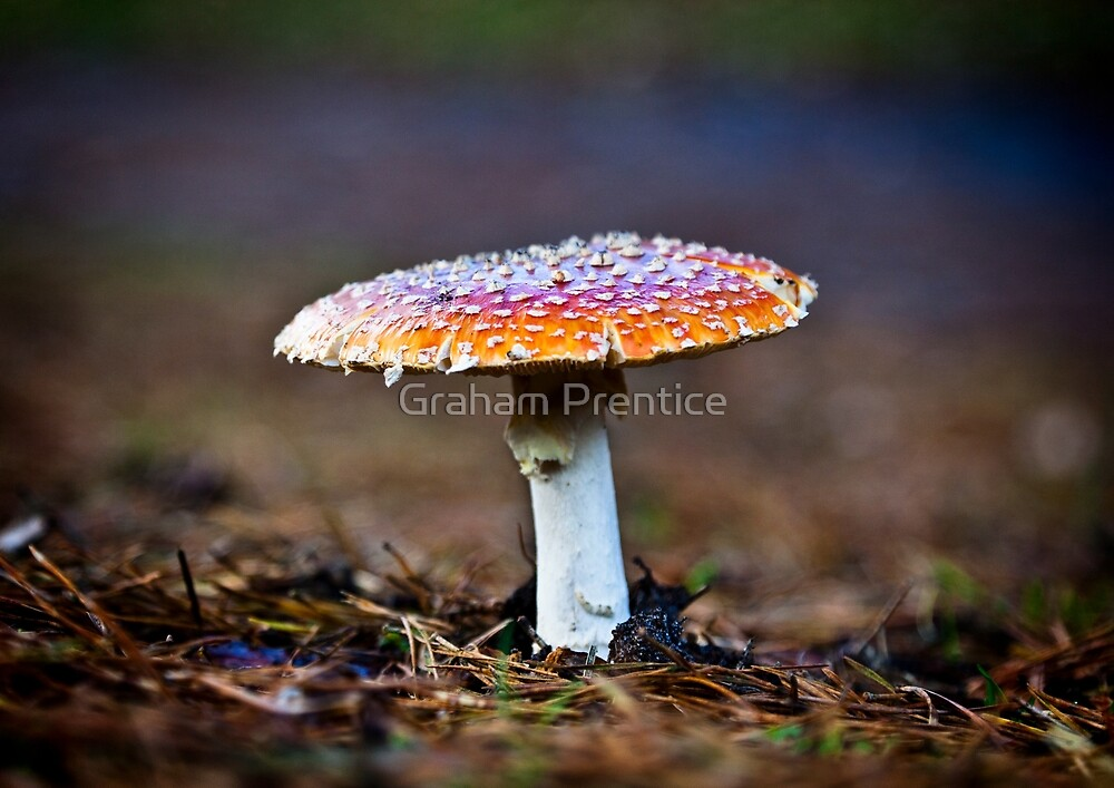 Fly Agaric by Graham Prentice
