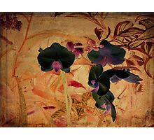Rossetti's Orchids Photographic Print