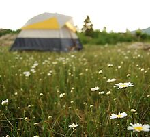 Meadow Camping - Near Scout Lake CO by Bo-Ross