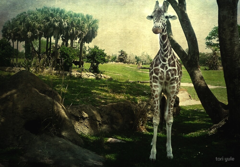 I Thought You Always Wanted To Be a Giraffe by tori yule