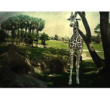 I Thought You Always Wanted To Be a Giraffe Photographic Print
