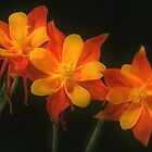 Columbines by Steve  Taylor