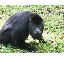 Small Howler Monkey Photographic Print