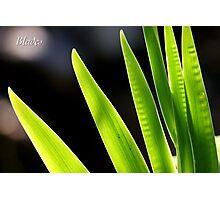 Blades Photographic Print