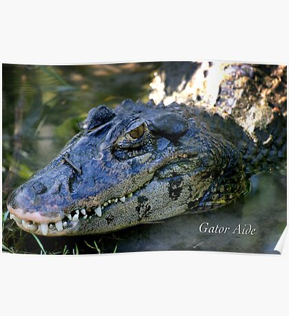 Gator Aide Poster