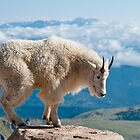 Mountain Goats by Gary Lengyel