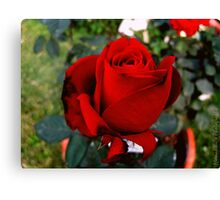 Red Scarlet Canvas Print