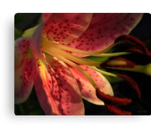Lovely Mary Canvas Print
