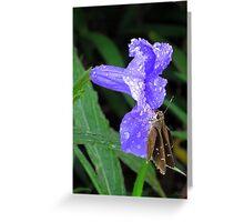 Purple Candy Greeting Card
