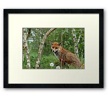 The Fox. Framed Print