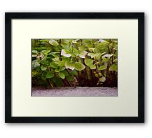 Street's Like A Jungle Framed Print