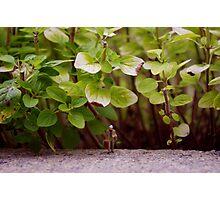 Street's Like A Jungle Photographic Print