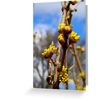 Spring Buds Greeting Card