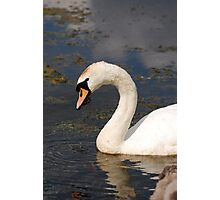 Mrs Swan Photographic Print
