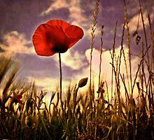 Poppy Eve by Priska Wettstein