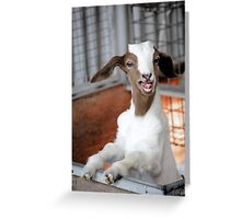 Hello!  Looks Like Lunch. Greeting Card
