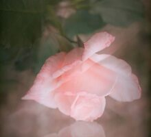 Softly Pink by Elaine Teague