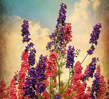 Delphiniums (Textured) by ScenicViewPics
