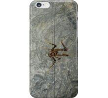 Cave Weta, Zealandia, New Zealand iPhone Case/Skin