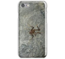 Cave Weta, Zealandia, New Zealand iPhone Case/Skin