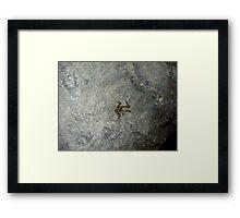 Cave Weta, Zealandia, New Zealand Framed Print