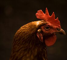 the eye of the chicken by Deanne Dwight