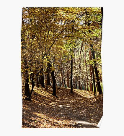 Warm autumn day in the woods Poster